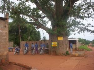 Tour 17 - Zem Baobab